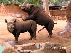 Monstrous rhinos fucks in the doggy style pose